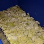 kimchi-making-21-fertig-eingelegter-chinakohl